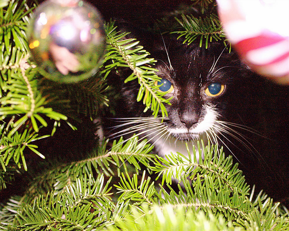 Found the Cat in the Christmas tree