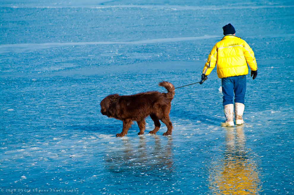 Man and dog on ice during polar bear plunge