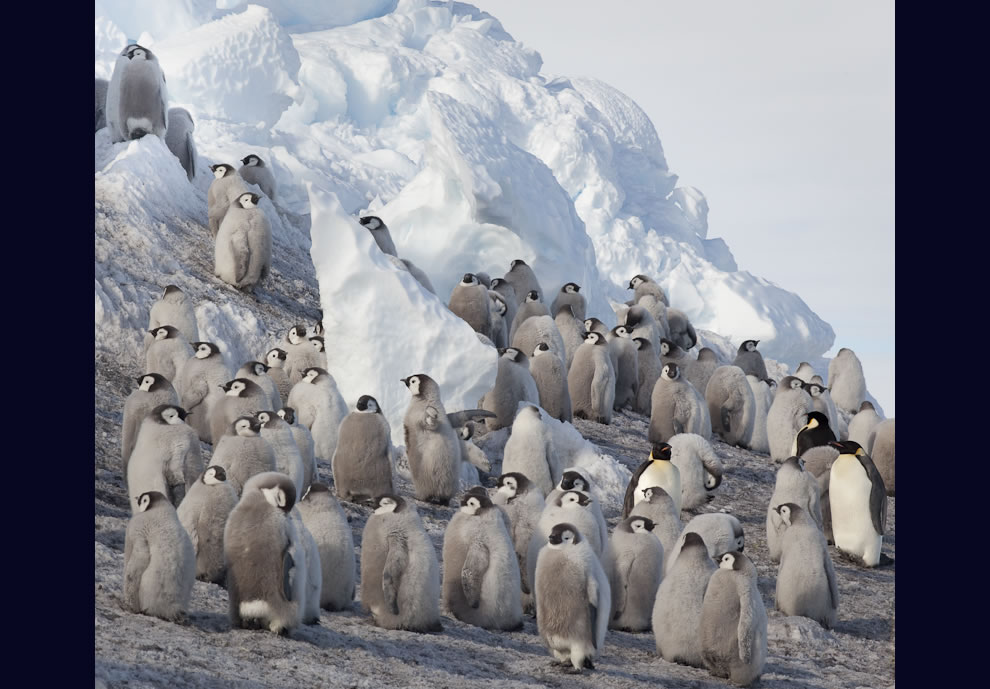 Meeting point for Emperor penguins