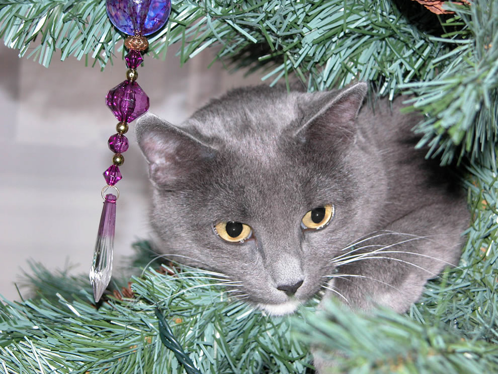 Cat in Christmas tree, Oooo --- What's That?