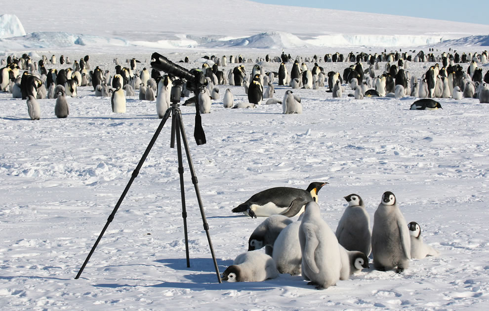 Penguin family photographers taking over camera