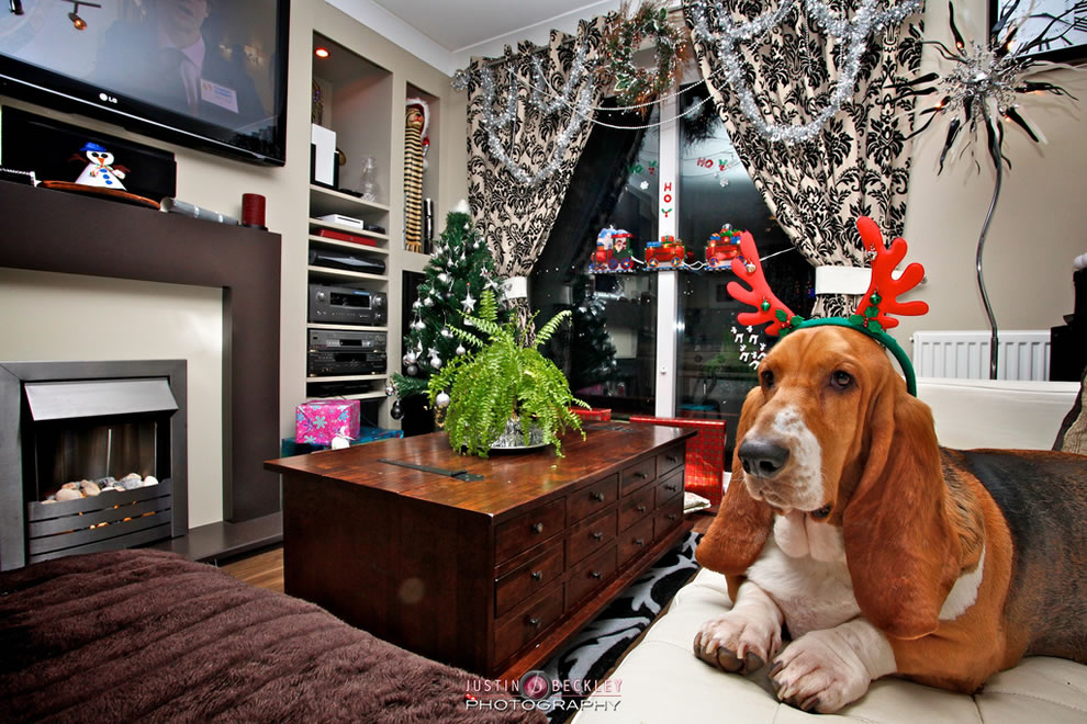 Reindeer Basset Hound on Christmas Eve