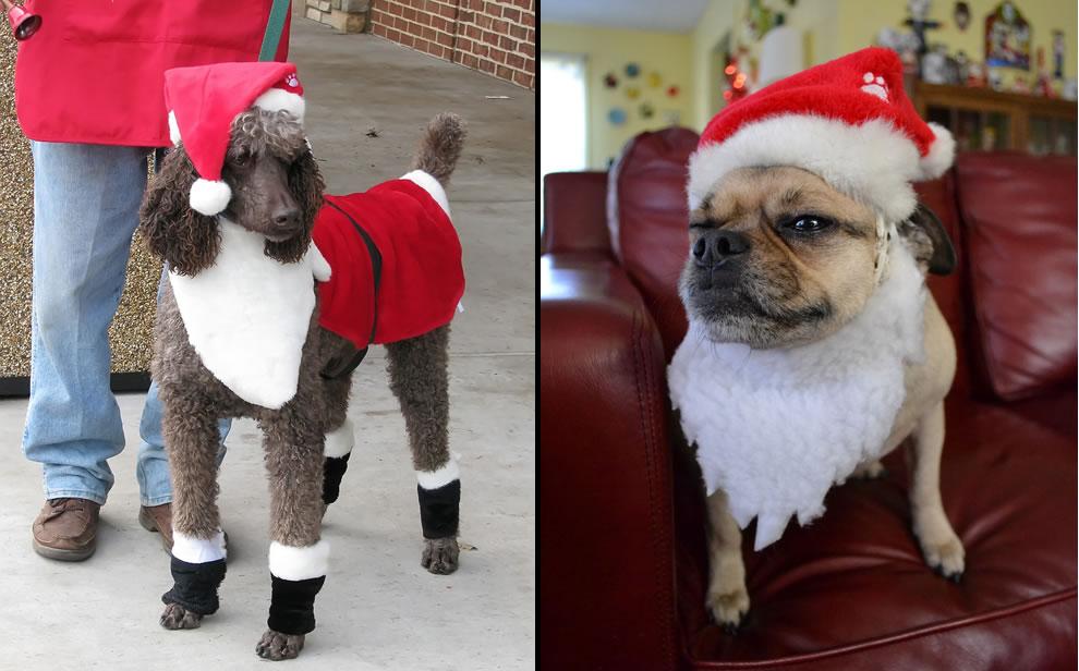 Santa Claus Dogs