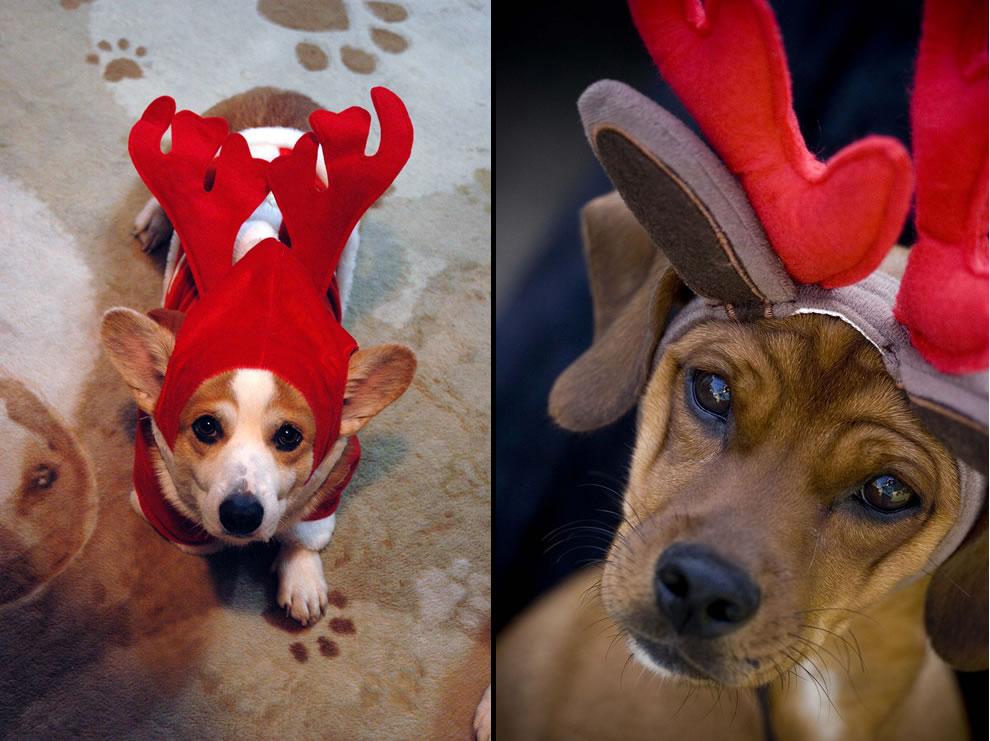Santa's Reindeer dogs
