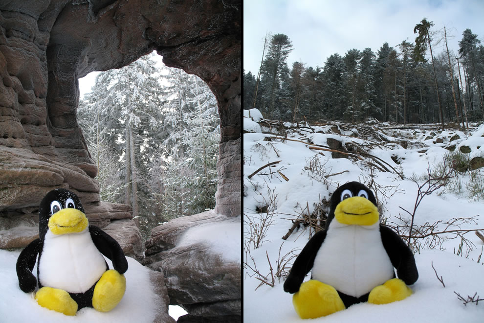 Tux seen in the wild (wilds of snowy nature)