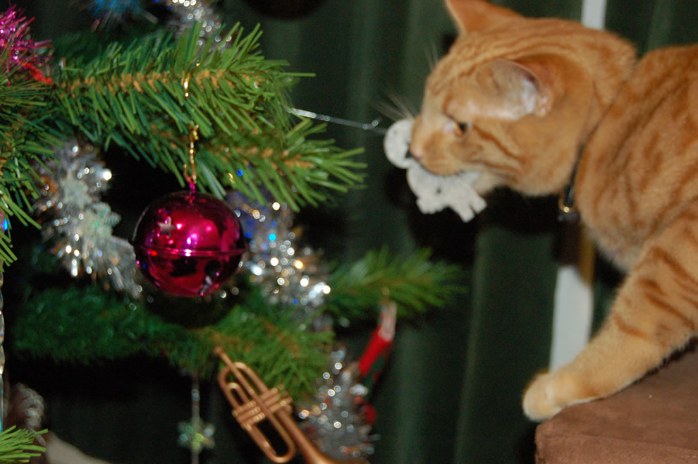 cat attacking christmas tree ornament, mmm, dangly food