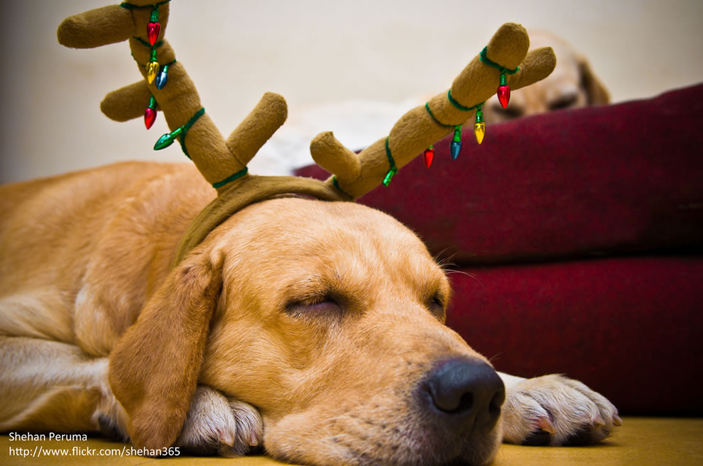 reindeer dreams :)