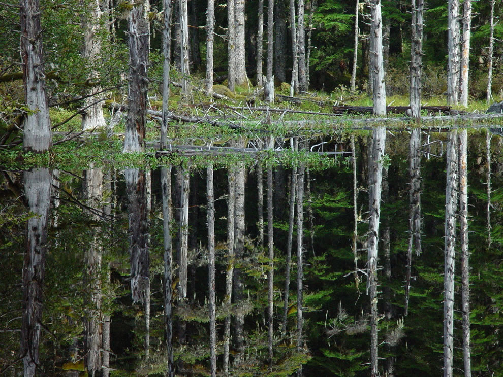 Blackwater Pond Reflection, Glacier Bay National Park & Preserve
