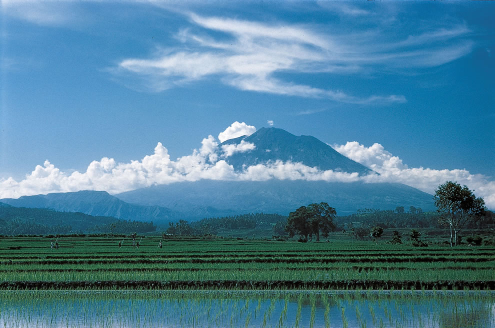 Rice fields in Bali with Mount Agung in background
