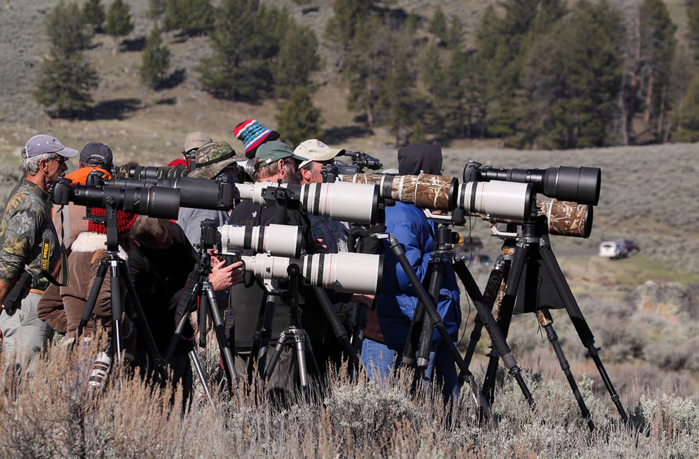 The Badgerazzi photographers, the other mammals of Yellowstone