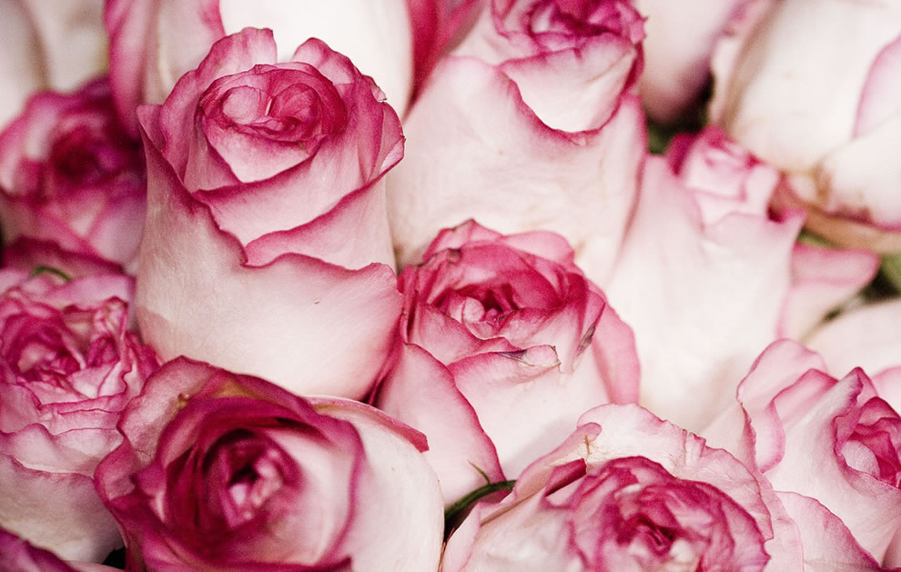 3d wallpapers of rose flowers