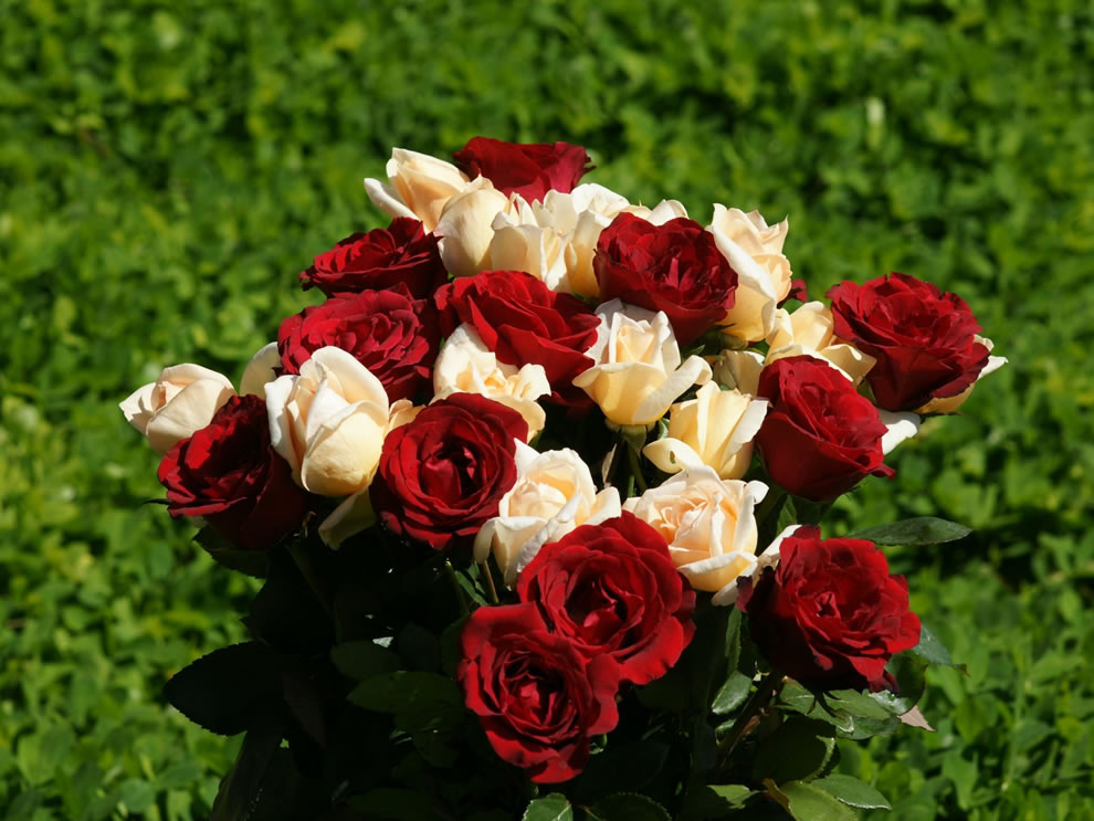 The combination of white roses and red roses symbolizes unity or an engagement