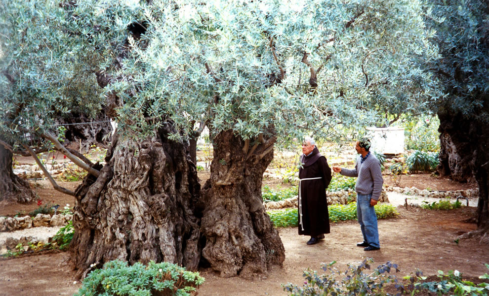 Gethsemane is a garden at the foot of the Mount of Olives in Jerusalem most famous as the place where, according to the gospels, Jesus and his disciples are said to have prayed the night