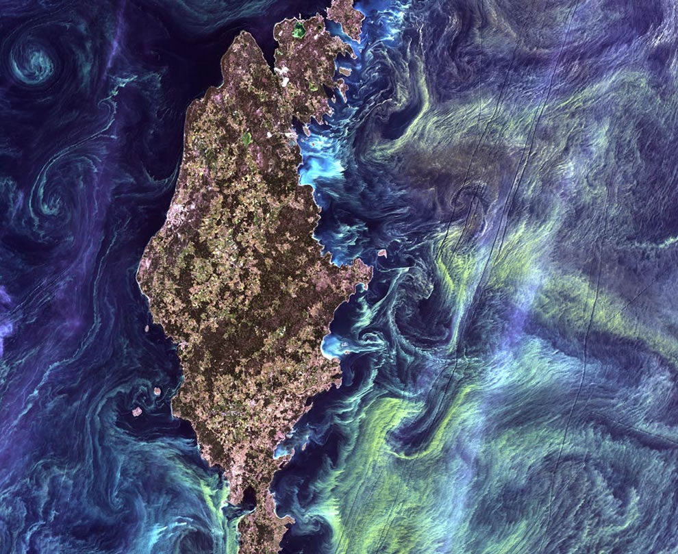 Greenish phytoplankton swirls in the dark water around Gotland, a Swedish island in the Baltic Sea