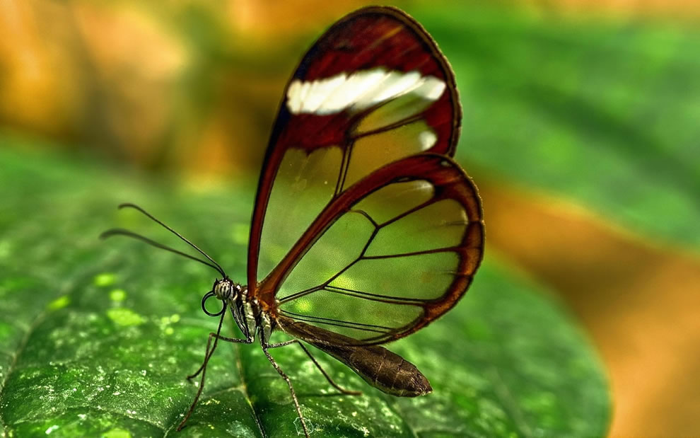 Love is like a butterfly, hold it too tight, it'll crush. Hold it too loose, it'll fly