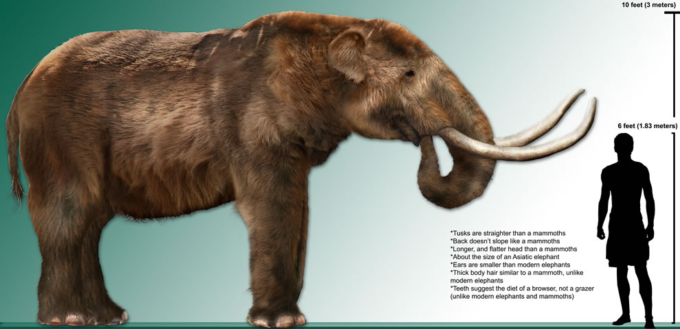 Mastodon compared to man