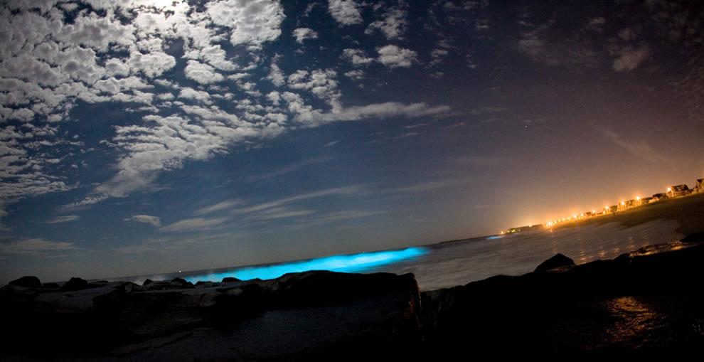 Night shot of bio-luminescent dinoflagellates producing light in breaking waves