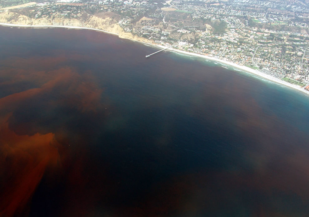 Red Tide, La Jolla, California