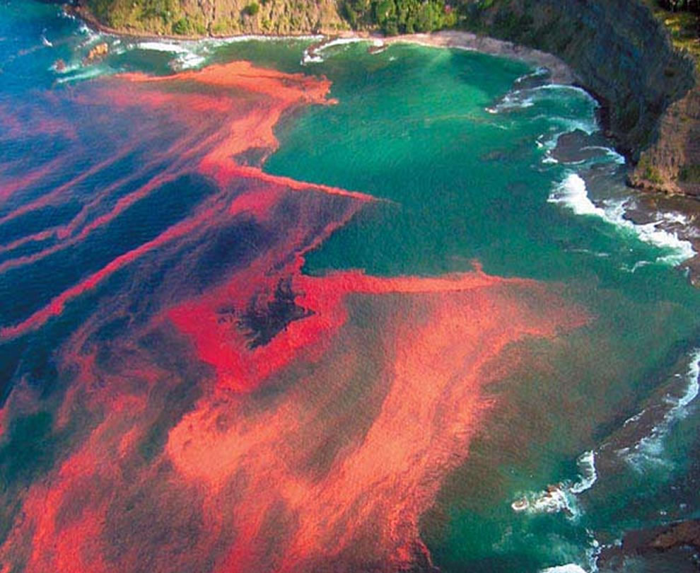 Red algal bloom at Leigh, near Cape Rodney