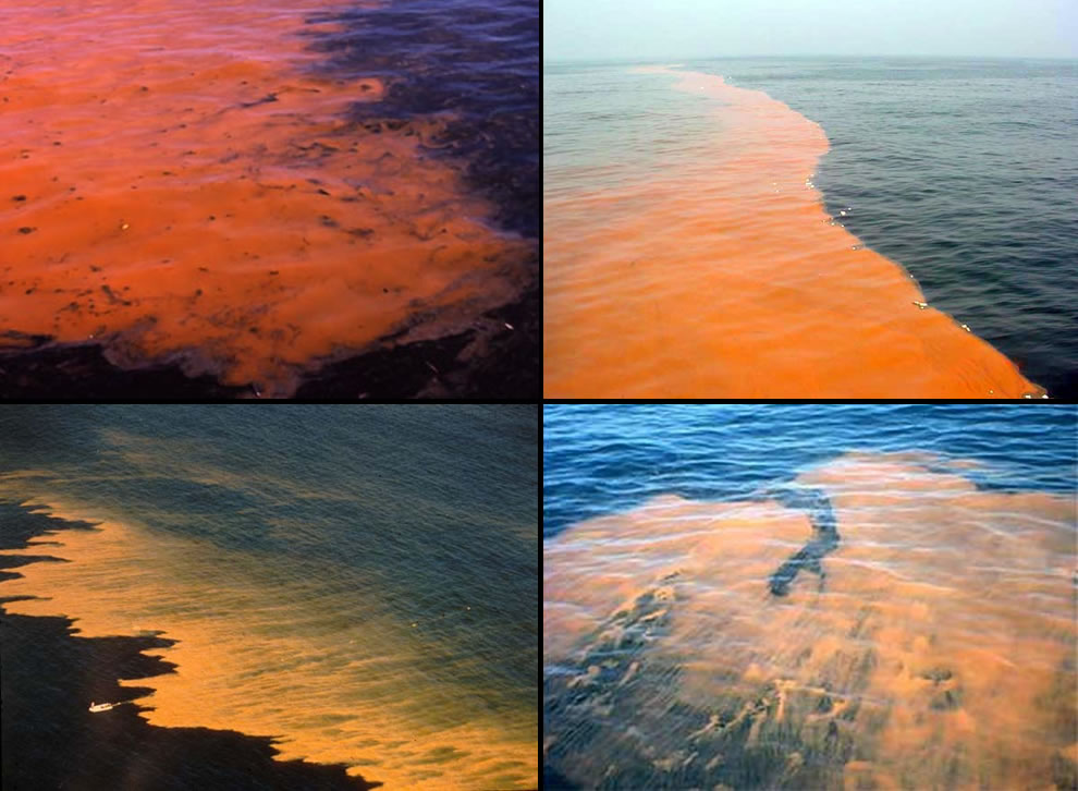 Red tide appearing orangish-red