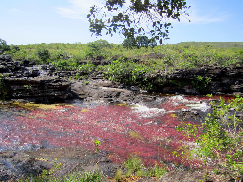 View of Caño Cristales, the River of Seven Colors, La Macarena, Colombia