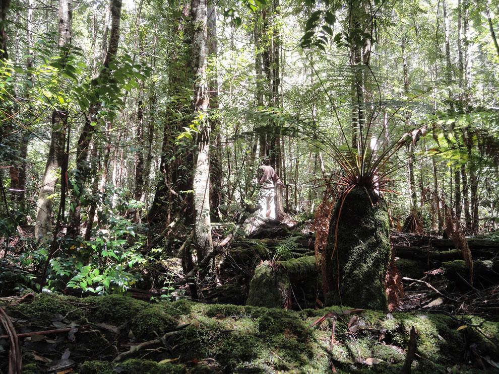 Butlers Gorge, edge of Tasmanian wilderness