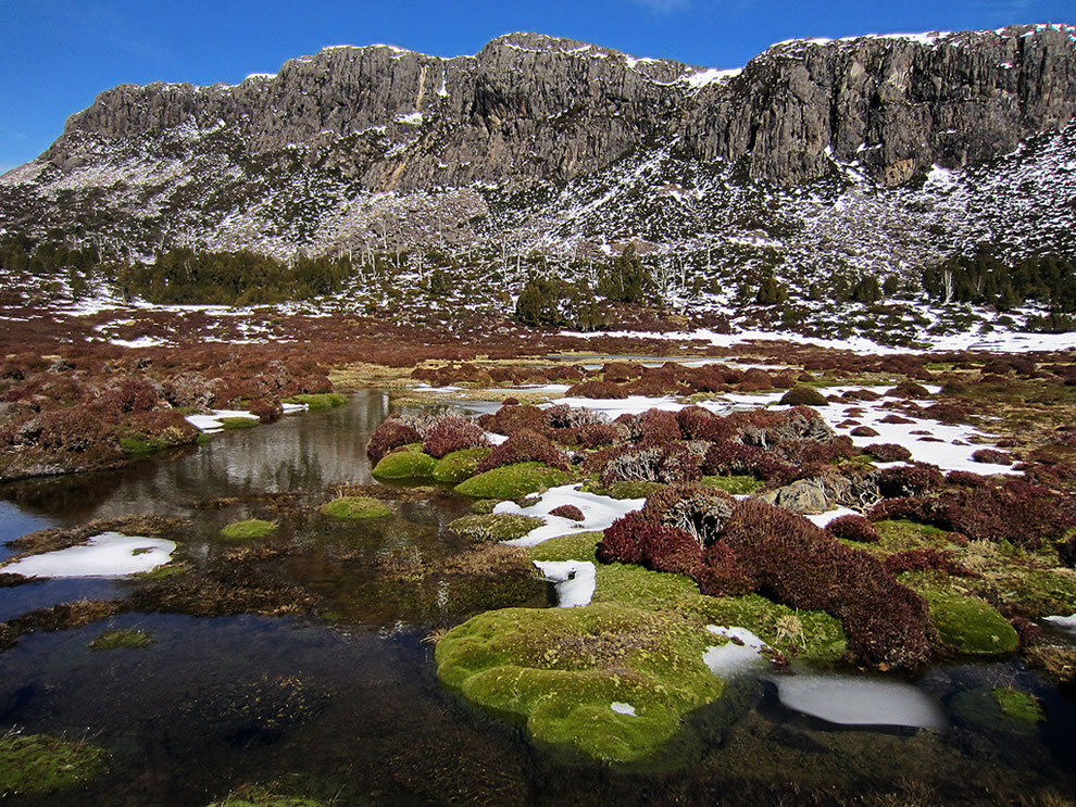 Cushion Plants - Walls of Jerusalem, Tasmanian Wilderness World Heritage Area