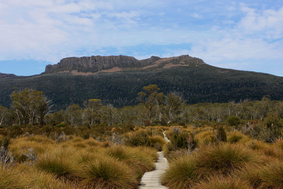 Eucalyptus Forest and Grassland, Tasmanian Wilderness World Heritage Area near Cradle Mountain, Lake St. Clair National Park