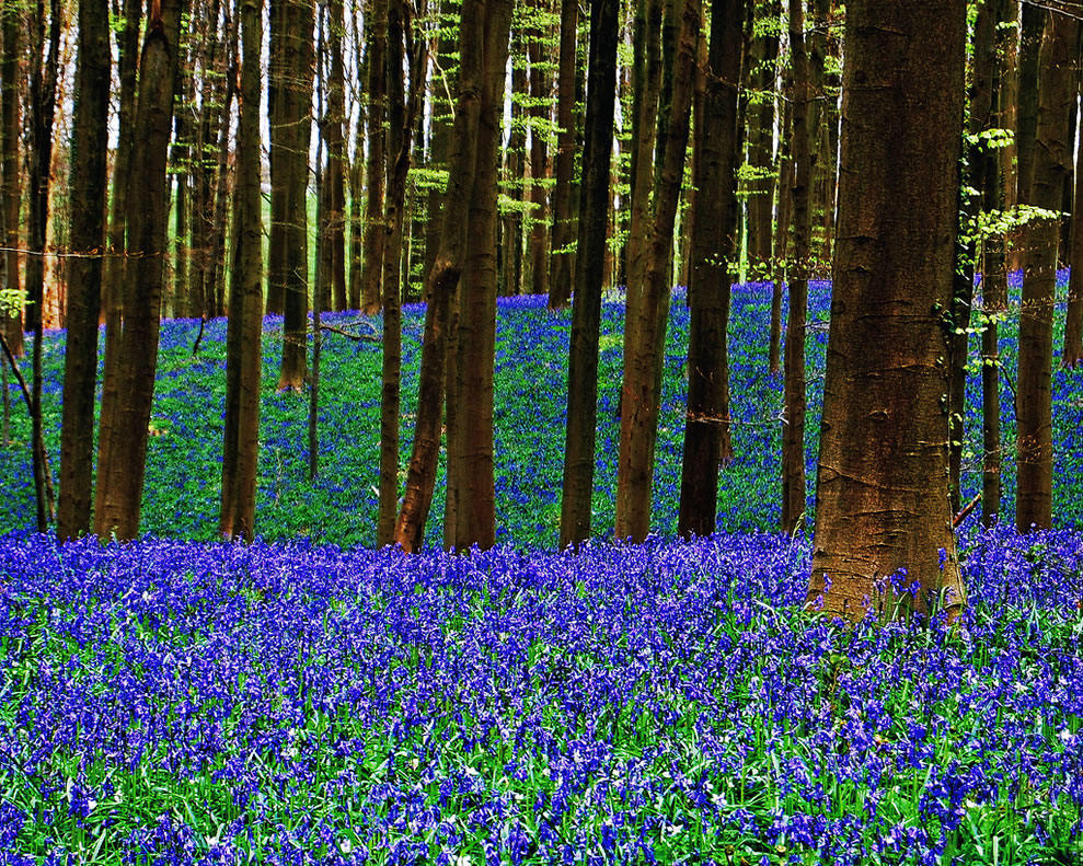 The three Layers of the enchanted Spring, bluebell time in the forest