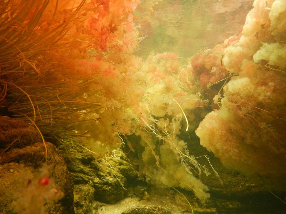 Underwater Caño Cristales