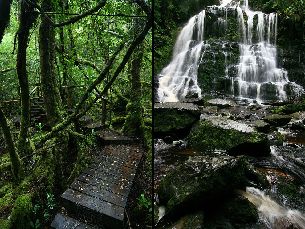 Vibrant green mossy path and waterfall in the Great Wilderness of Tasmania