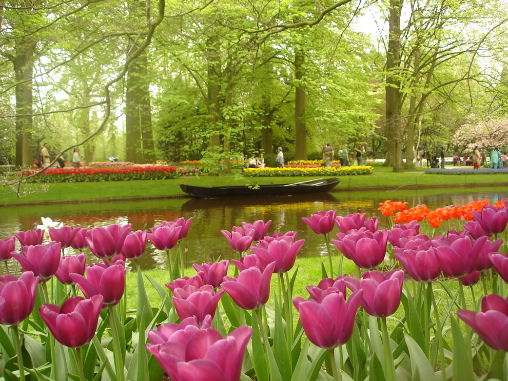 A small boat with tulip flowers in the foreground - Keukenhof, Lisse, The Netherlands