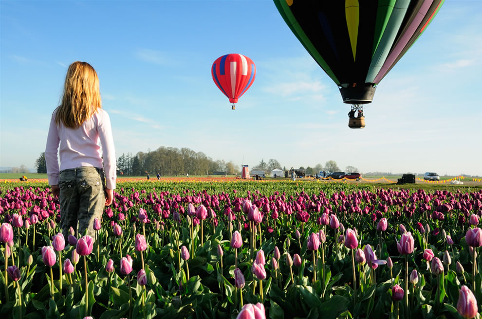 Dreamin' - Hot Air Balloon Rides over the Wooden Shoe Tulip festival