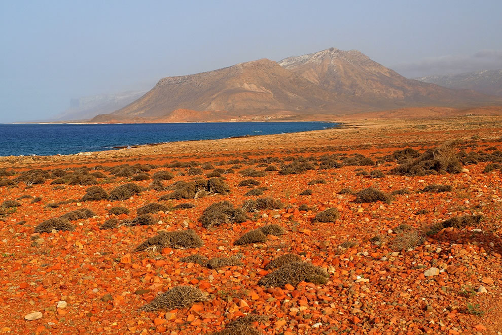 Socotra is the largest of four islands off Yemen that make up a small archipelago