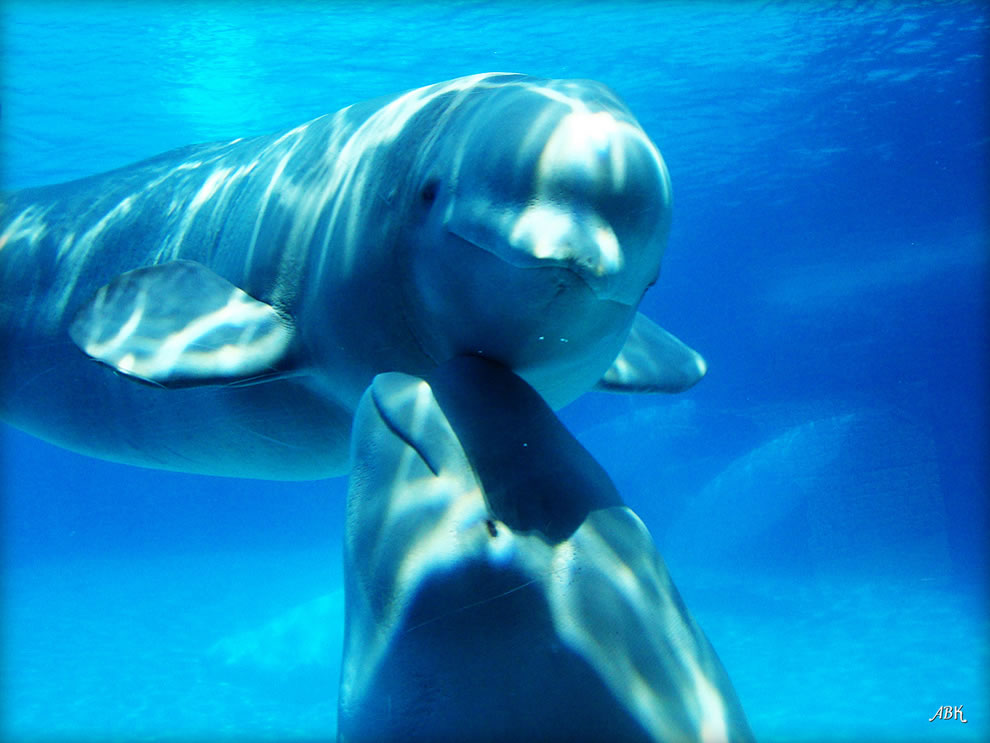 Tender moment with mom and baby dolphin