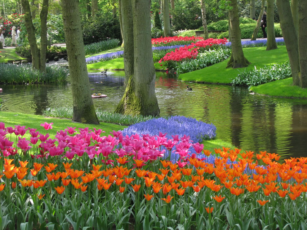 Tulips at Keukenhof, also known as the Garden of Europe