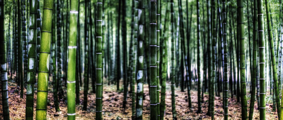 Anji Bamboo Garden, China