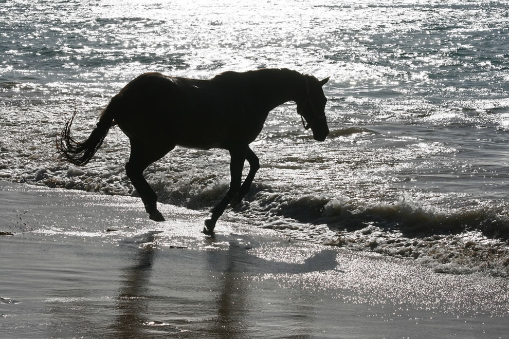 Black Beauty having fun on Buccoo Beach on Tobago
