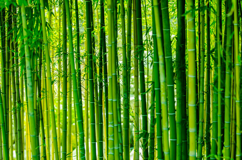 Beautiful bamboo forests pics