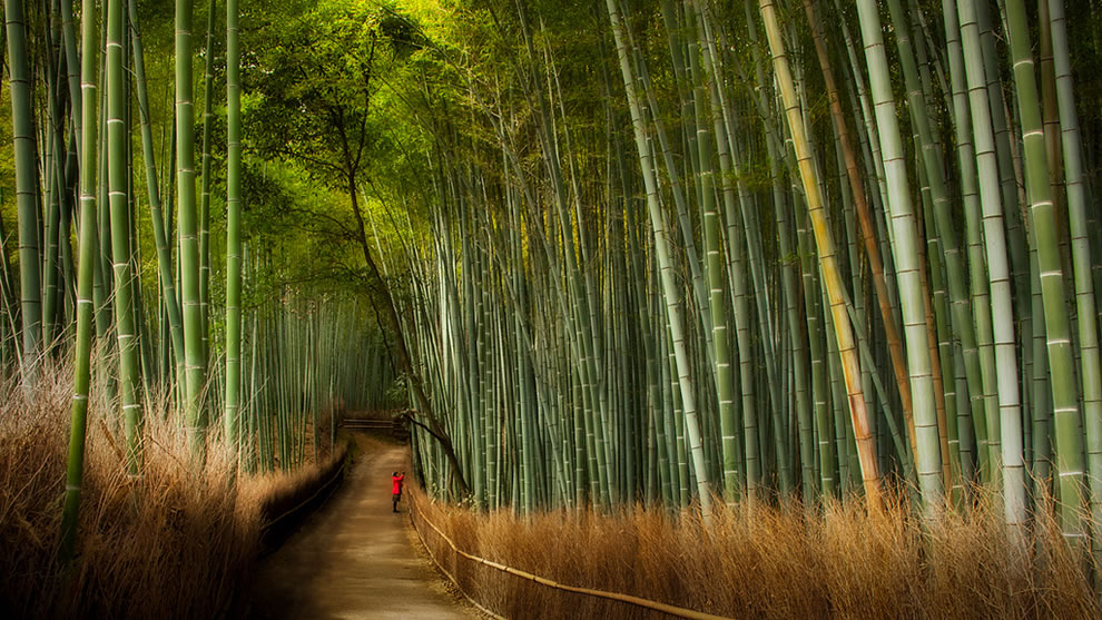 Famous Kyoto Bamboo Forest