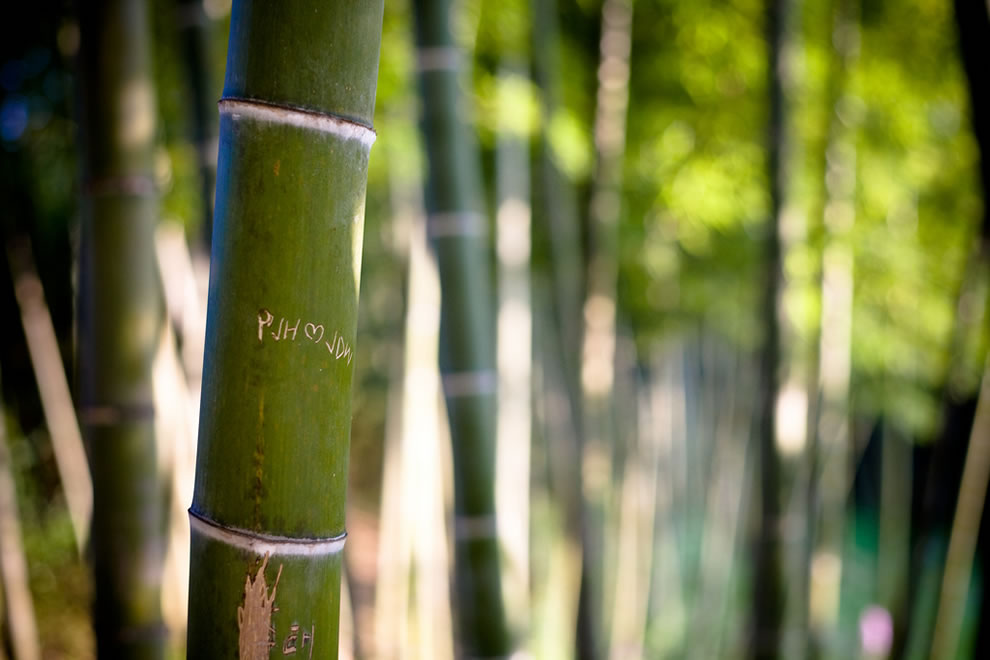 Love in the DamYang Bamboo forest