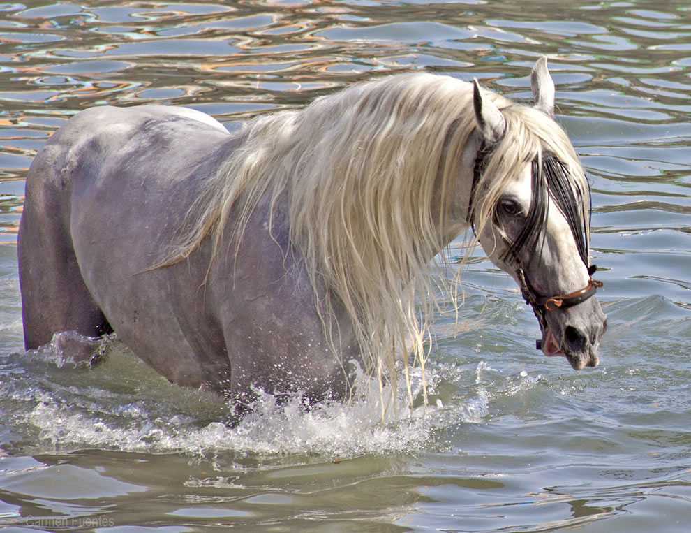 Magnificent horse in the sea