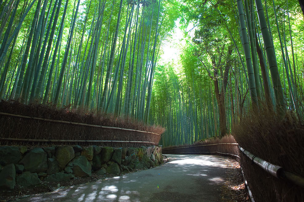 Native bamboo forest, in Arashiyama, Japan