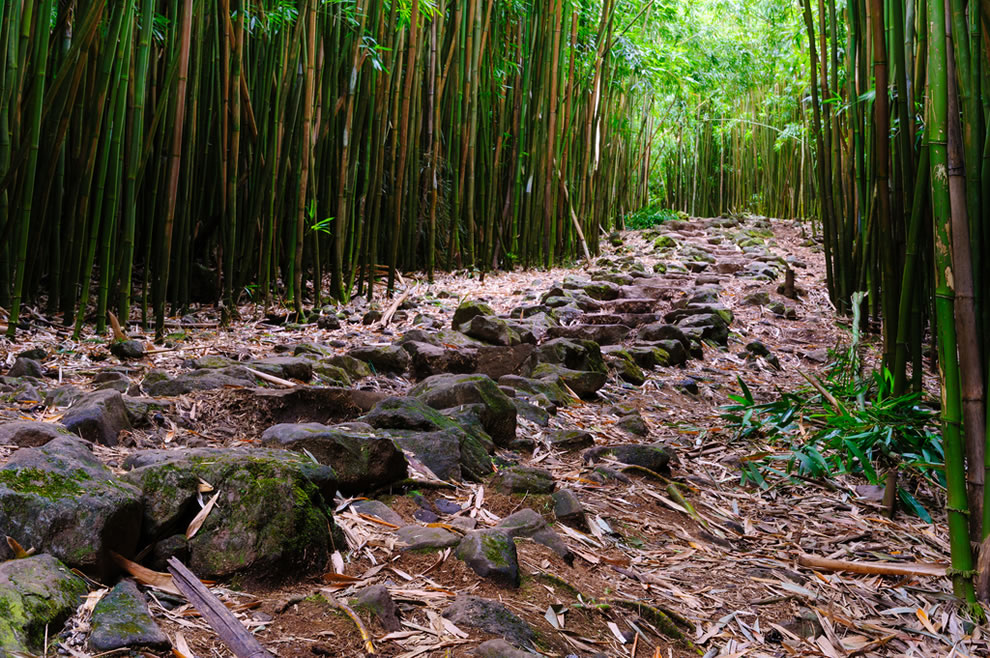 Pipiwai Trail bamboo forest