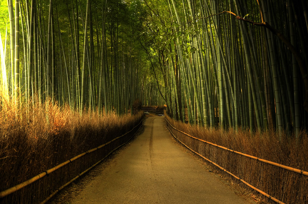 The bamboo forest in Kyoto, at the Arashiyama area