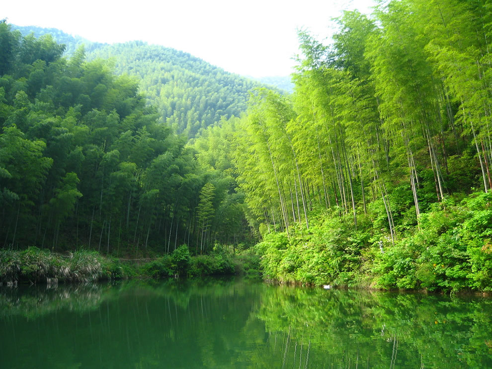Water and mountains, entering the bamboo forest