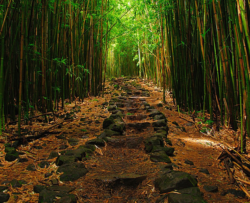 trail through the bamboo forest in Koali, Hawaii