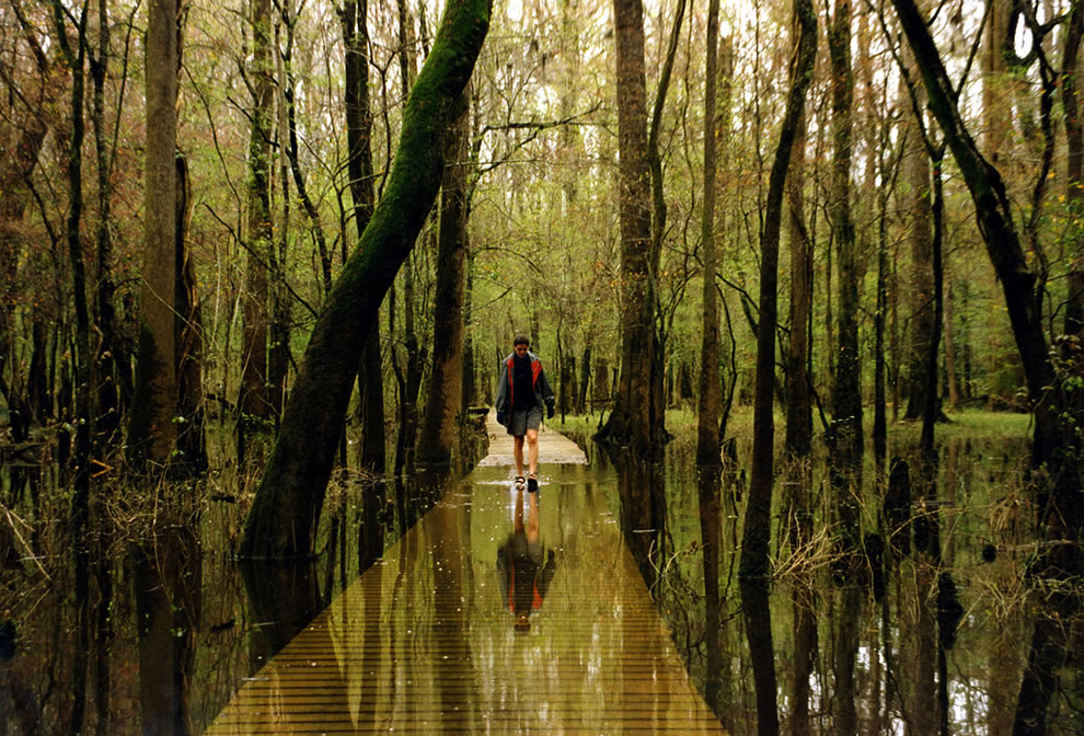 Flooded boardwalk through Congaree National Park floodplain forest