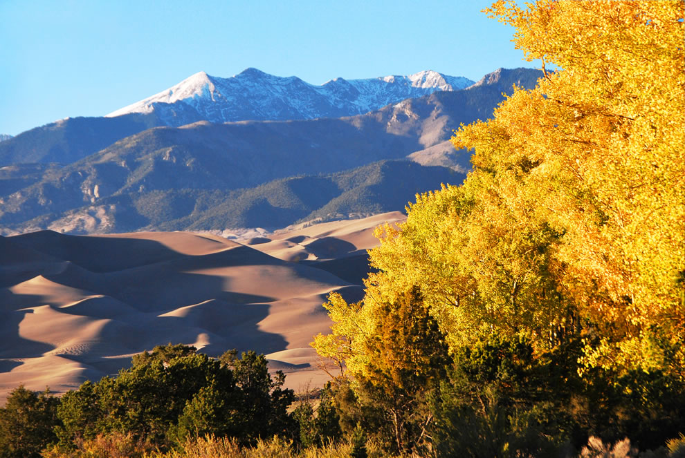 Gold Aspens, Dunes, and Cleveland Peak at Great Sand Dunes National Park and Preserve in Colorado