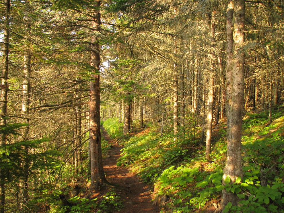 Tobin Harbor Trail through Laurentian Forest habitat, at sunset, Isle Royale National Park